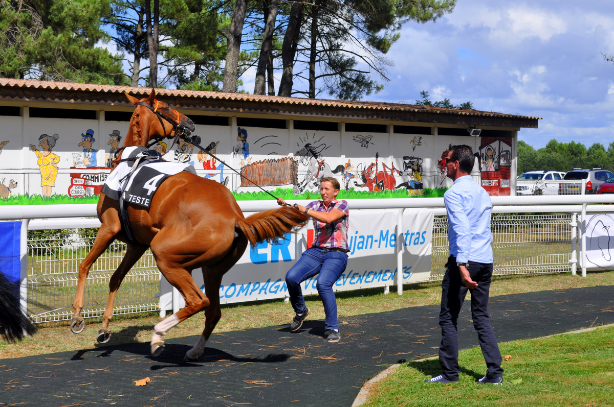 Cheval-4-avant-course-hippodrome-la-teste | Hippodrome La Teste de ...