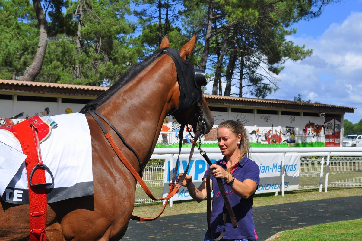 chevaux-dans-le-rond